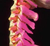 Le muscle trapézoïde la douleur dans le cou