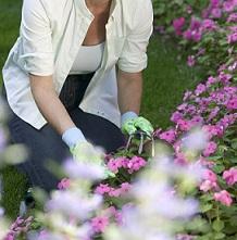 Mal de dos au jardin que faire stop maux de dosstop maux de dos - Que faire au jardin en avril ...