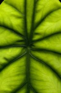 Comment soigner le mal de dos grâce aux pouvoirs des plantes